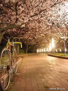 rossin-special-cherry-blossom-002