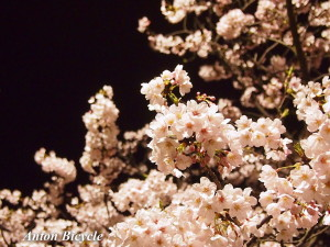 rossin-special-cherry-blossom-004